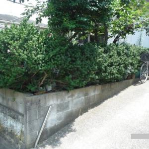 フェンス、カーポート、物置 ~ 植木伐採。