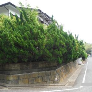 植木、ポスト、トイレ、テラス屋根まとめて工事 ~ ご要望は。