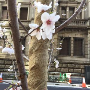 桜は来年も咲く…