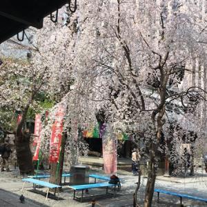 季 ~京都の桜2019~