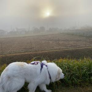 雲海散歩☆