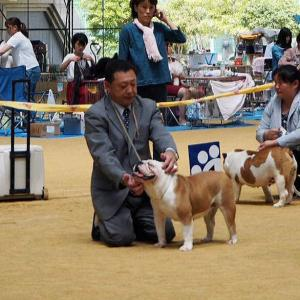 ドッグショー IN 滋賀