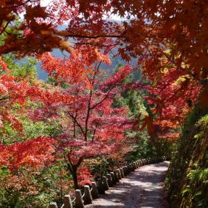 数週間前にギリギリで行ってきました、奈良