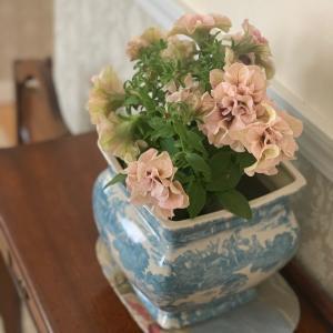 ティーパーティーという名のお花