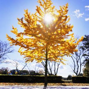 11月の初心者さん向け撮影会 ~キラキラの紅葉を撮りましょう~