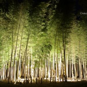 Bamboo Winter Lights 2019 ~神秘の竹あかり~ in 若山農場