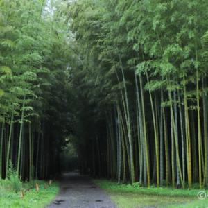 若竹の杜 若山農場 ~雨の日の竹林は美しい~