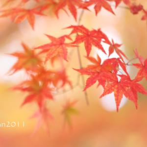 初心者さんのための写真講座 ~紅葉を切り取ろう~ in 真岡井頭公園