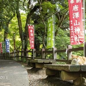 佐野 唐沢山(からさわやま)城址の唐澤山神社 ~猫たちに癒される~