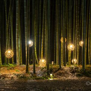 若竹の杜 若山農場 ~夏季限定ライトアップ始まりました~