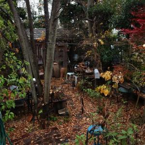 雨上がりの庭♪