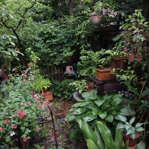 雨と庭の・・・