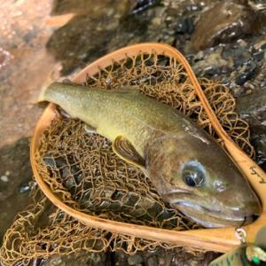 9月の尺岩魚