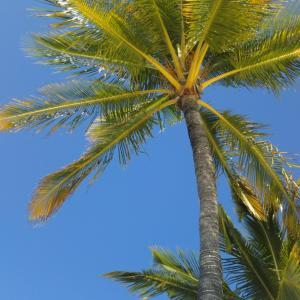 ハワイ島に来ています♪