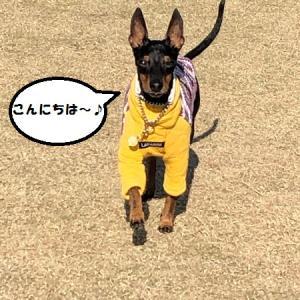 カリノちゃん、7歳になりました☆彡