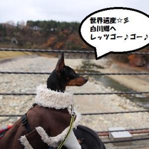 カリノちゃん、岐阜県へ行く♪~二日目は白川郷へレッツゴー~