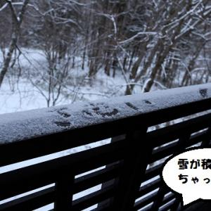 カリノちゃん、岐阜県へ行く♪~3日目高山わんわんパラダイスホテル編~