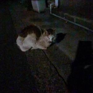 緊急保護猫さん