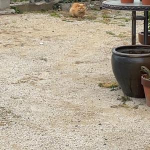 外猫の過酷さ