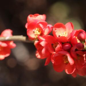 吉野弘さんの詩 6 「私の詩の原点」