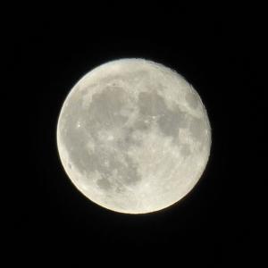 今夜は月がとってもきれい