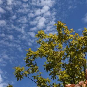 秋の空と秋の花