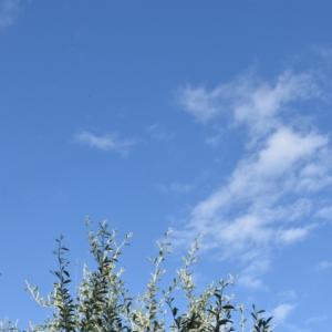 碧い空と青い花
