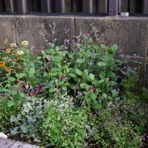 夏の庭が少し成長しました。