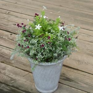 ダイアモンドフロストにセンコウハナビの赤い花を添えて