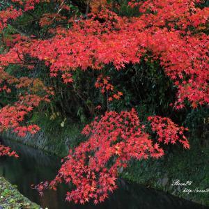 哲学の道 赤と緑の川辺
