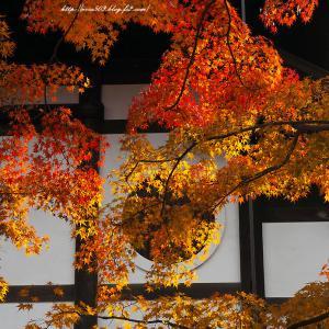 丸窓と紅葉 東寺