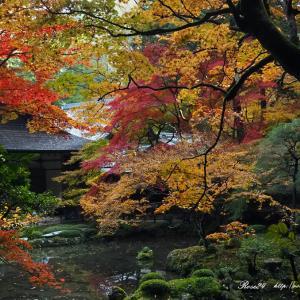 南禅院庭園の彩り