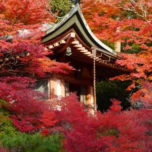 赤の彩り 毘沙門堂