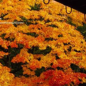 天授庵庭園の彩り