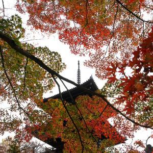紅葉越しの塔 真如堂