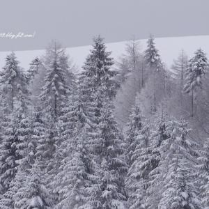 モノトーンの森