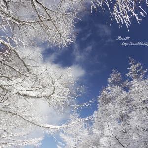 快晴の樹氷の森