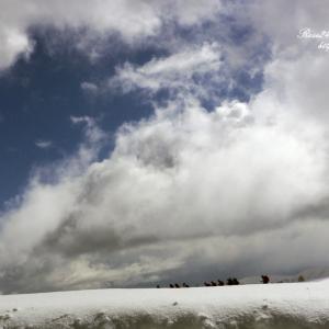 雲晴れて雪原を行く