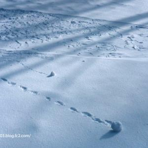 雪の玉ころころ