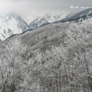 静かなる樹氷の森