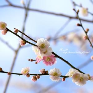 青空に春の香り