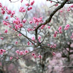 春の香り広がる