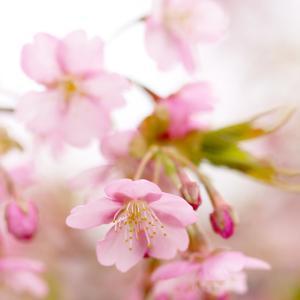柔らかな春の光の中で