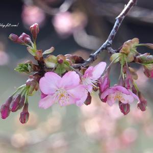 柔らかな春の日に