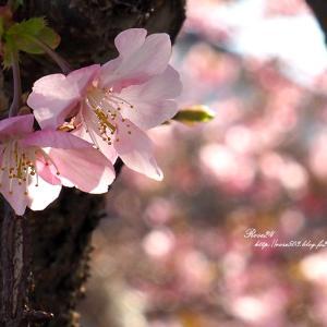 小さな胴吹き桜