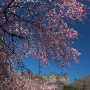 妙義山としだれ桜
