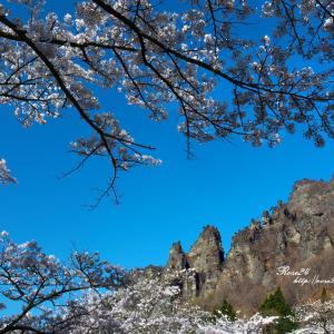 青空と桜と岩山と