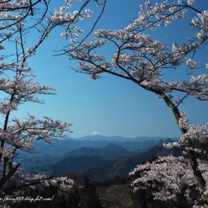 桜の窓から山並みを望む