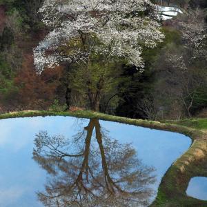山里の水鏡