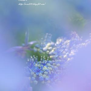 紫のヴェール